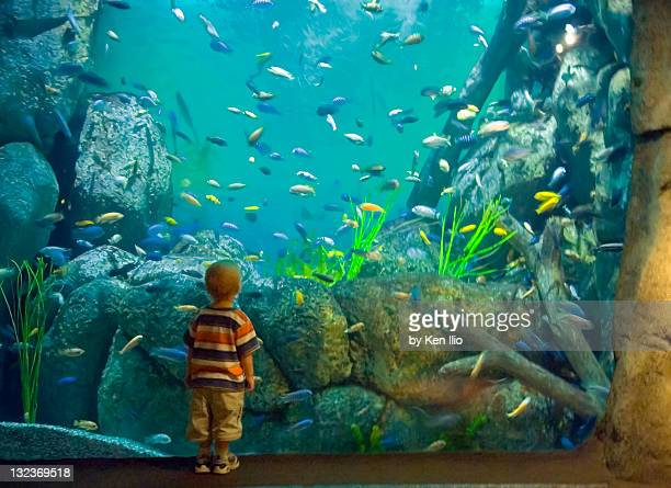 Boy in aquarium  of colorful fish swimming