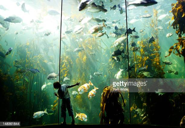 Boy in Aquarium