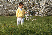 Boy (6-7) in field by cheery blossom tree