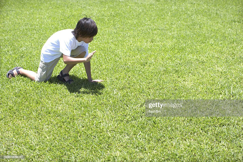 Boy (8-9) in field trying to catch grasshopper, elevated view : Stock Photo