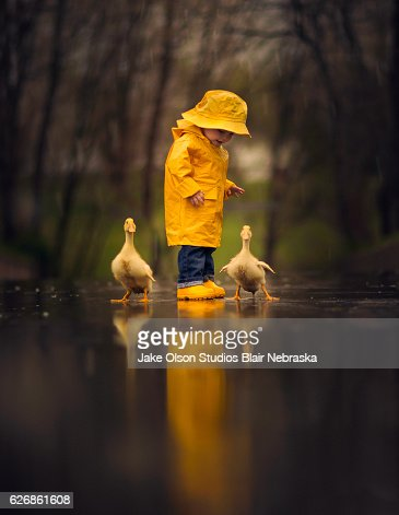 Boy in the rain with ducks : Stock Photo