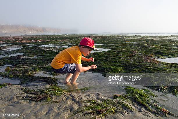 Boy In The Tidepools 7295