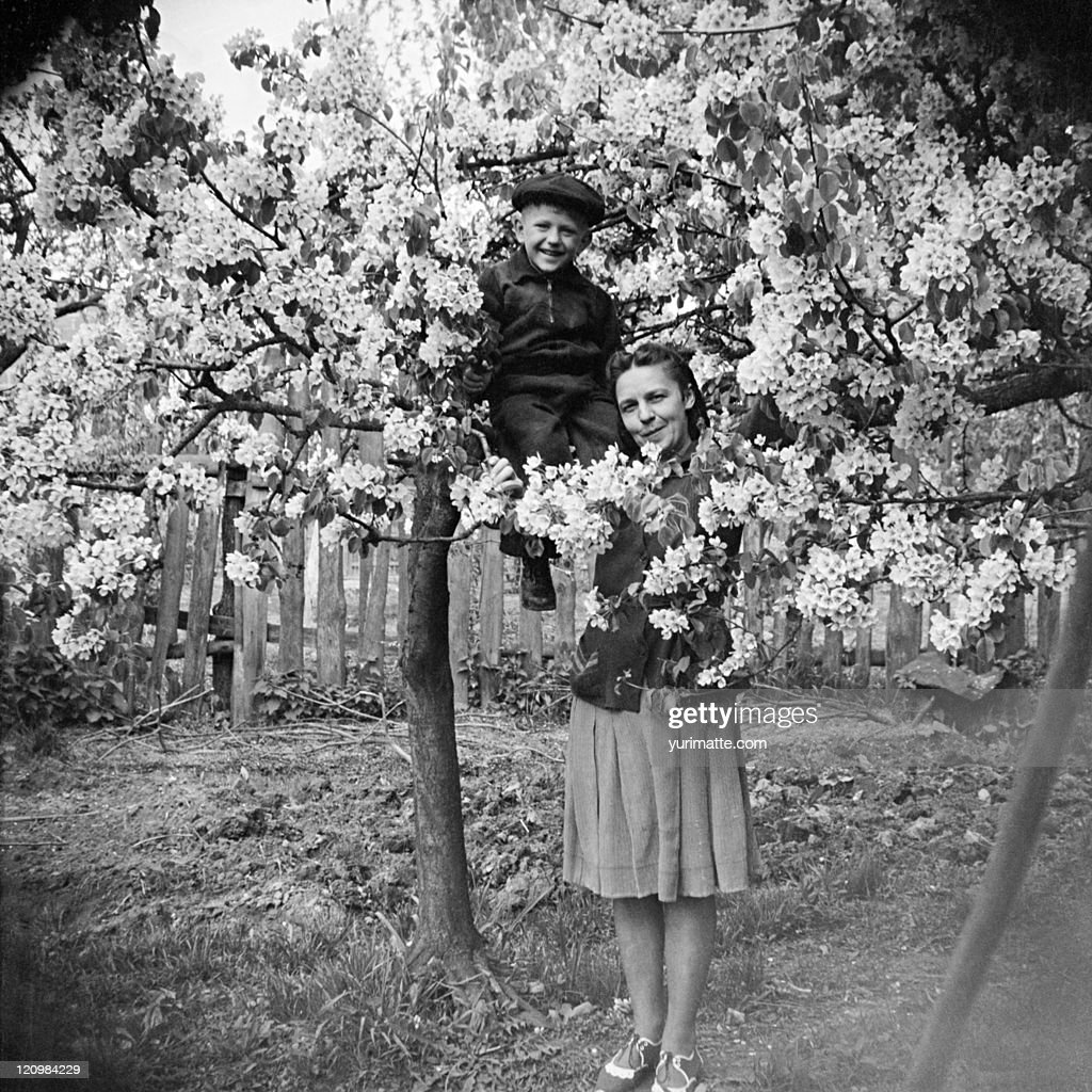 Boy in tree with mother : Stock Photo