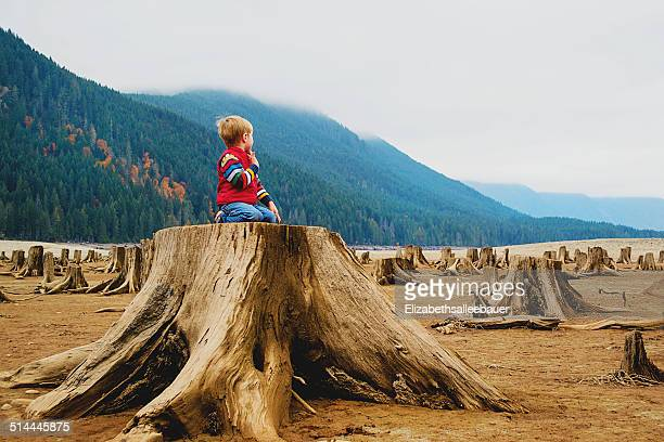 Boy (4-5) kneeling on tree stump