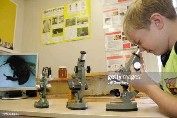 A boy looking at a bee through a microscope at Manchester Beekeepers