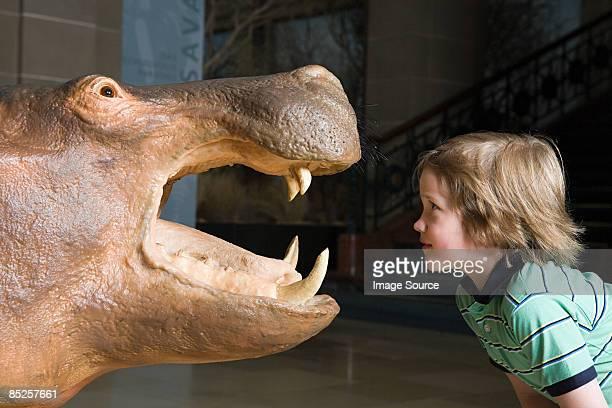 Boy looking at a stuffed rhino