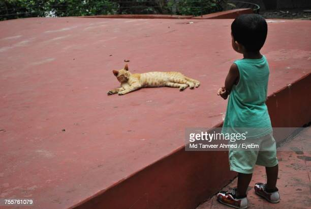 Boy Looking At Cat Sleeping On Concrete Structure