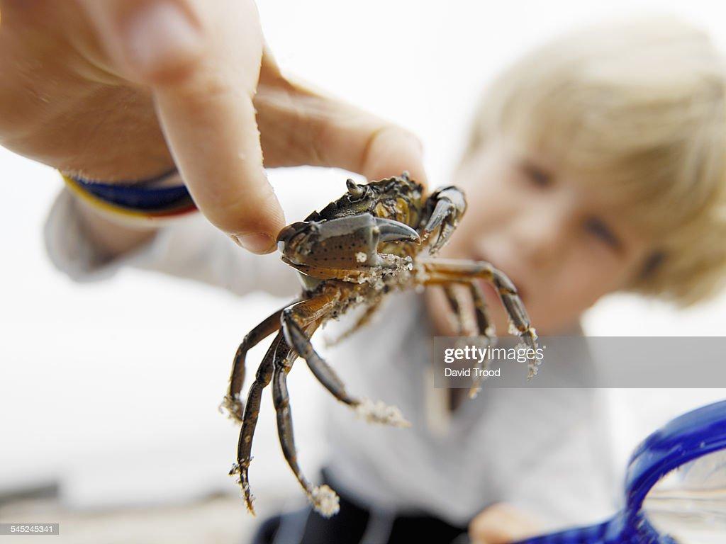 Boy looking at crab