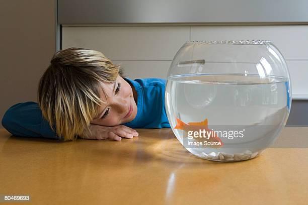 Boy looking at goldfish