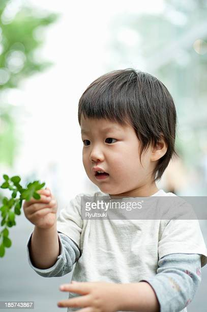 Boy looking at leaves on plant