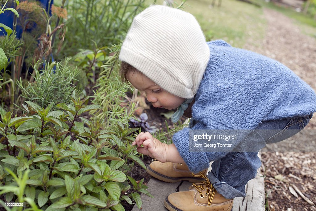 Boy looking at plants : Stock Photo