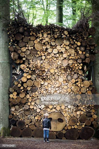 Boy looking at stack of firewood in forest