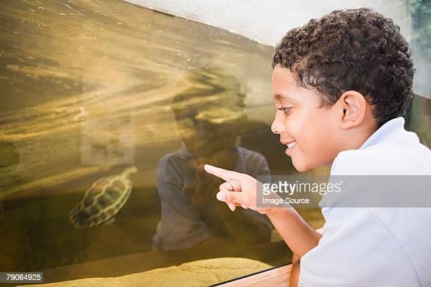 Junge auf der Suche im terrapin