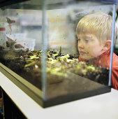 Boy (7-9) looking at terrarium in classroom, close-up