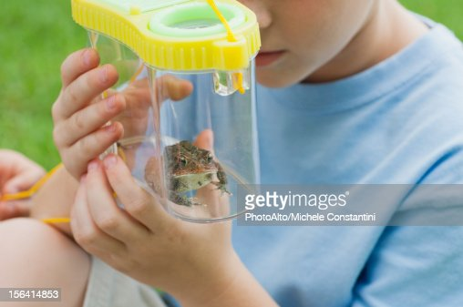 Boy looking at toad in terrarium, cropped : Stock Photo