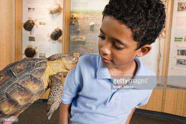 Boy looking at tortoise