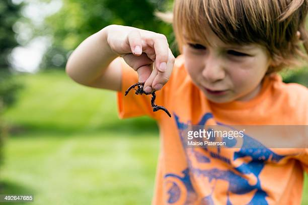 Boy (4-5) looking at worm in summer landscape, Michigan, USA