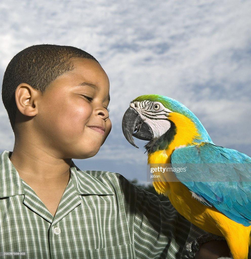 Boy (6-8) looking at yellow and blue Macaw (Ara ararauna) smiling : Stock Photo