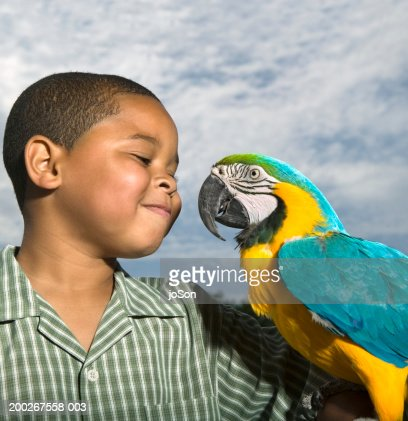 Boy (6-8) looking at yellow and blue Macaw (Ara ararauna) smiling : Stock Photo