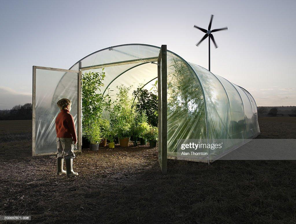 Boy (6-7) looking inside greenhouse