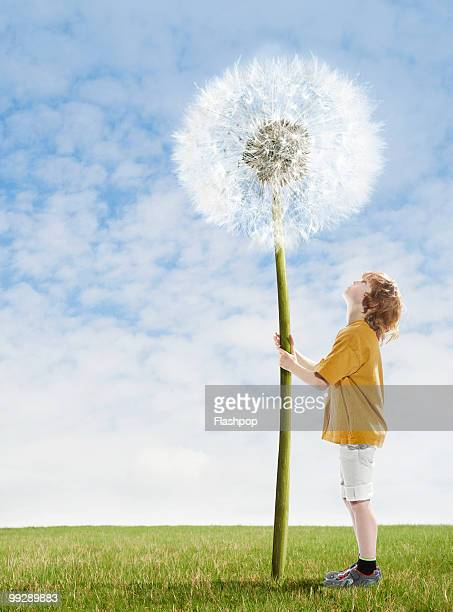 Boy looking up at giant dandelion