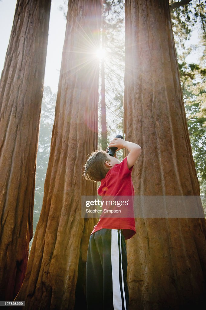 boy looking up gigantic trees with binoculars : Stock Photo