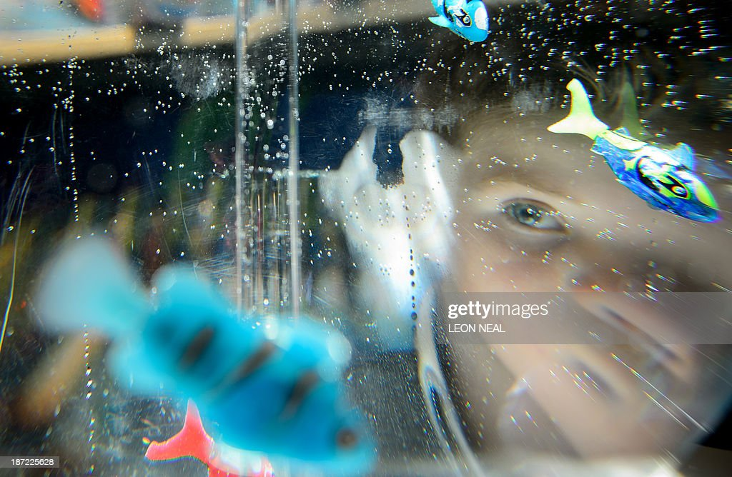 A boy looks at a tank full of toy Robofish at the Dream Toys 2013 top ten preview event in London on November 6, 2013. The event sees manufacturers of the predicted Christmas bestsellers showcase their products in the run up to the festive season.