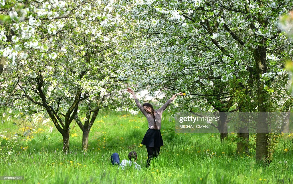 A boy looks at his girlfriend under the blossoming trees on May 1, 2016, at Petrin hill, in Prague. / AFP / Michal Cizek