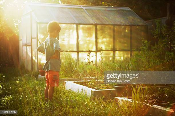 Boy looks at vegetable patch at dawn