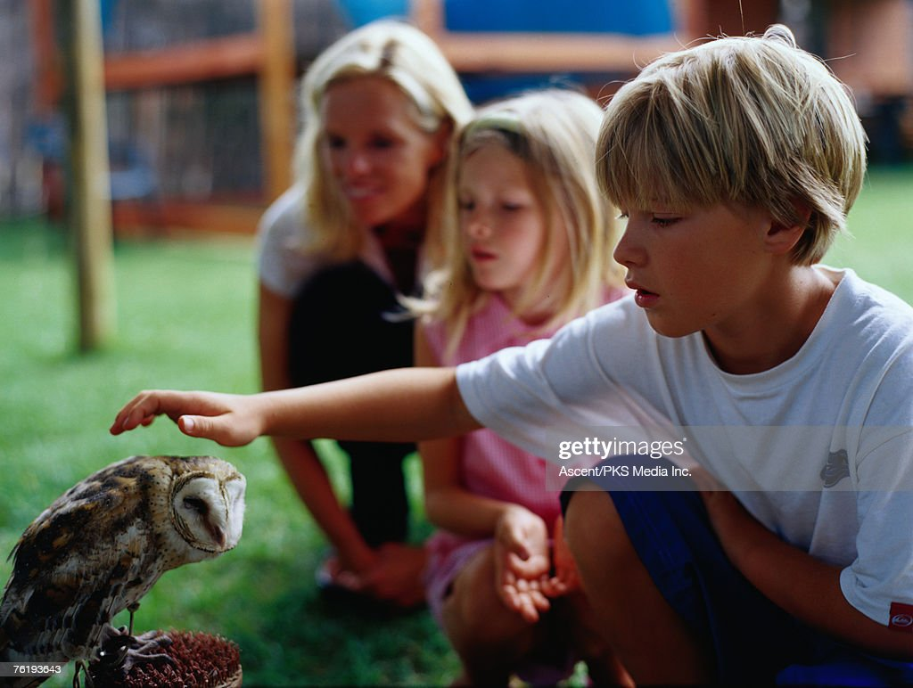 Boy patting an owl at the Spier Wildlife Shelter, Cape Town, Western Cape, South Africa, Africa : Stock Photo