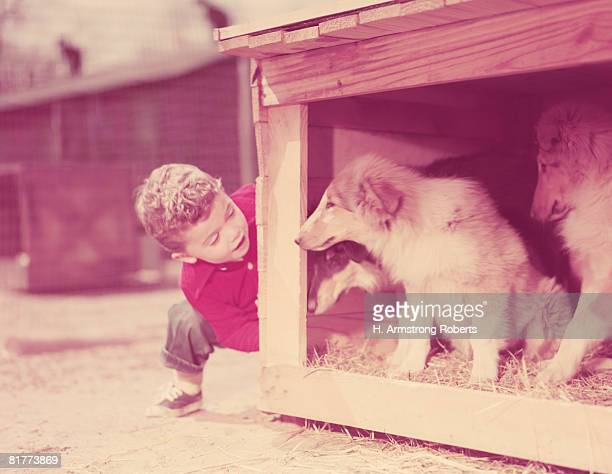 Boy peeking around corner, looking at collie puppies in dog house. (Photo by H. Armstrong Roberts/Retrofile/Getty Images)