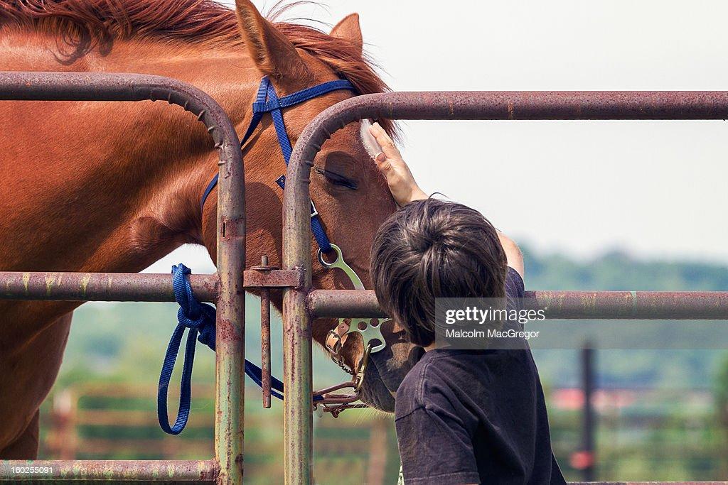 Boy Petting Horse : Stock Photo