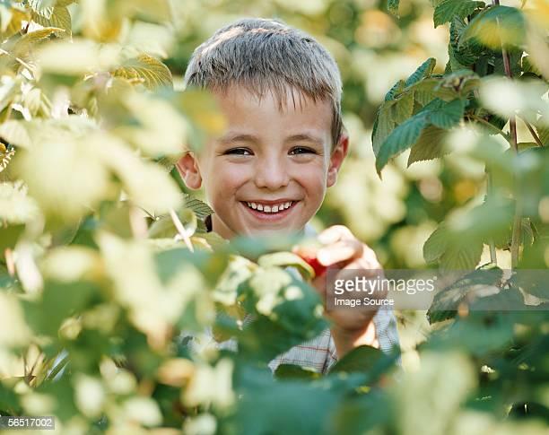 Boy picking a strawberry
