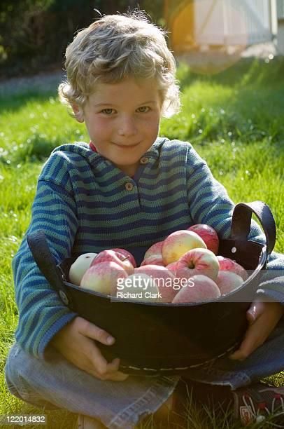 Boy (6 years) picking apples