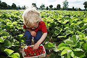 Boy picking strawberries in field
