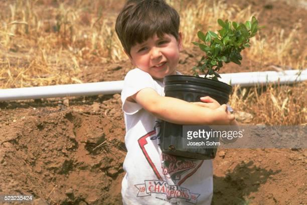 Boy Plants Tree