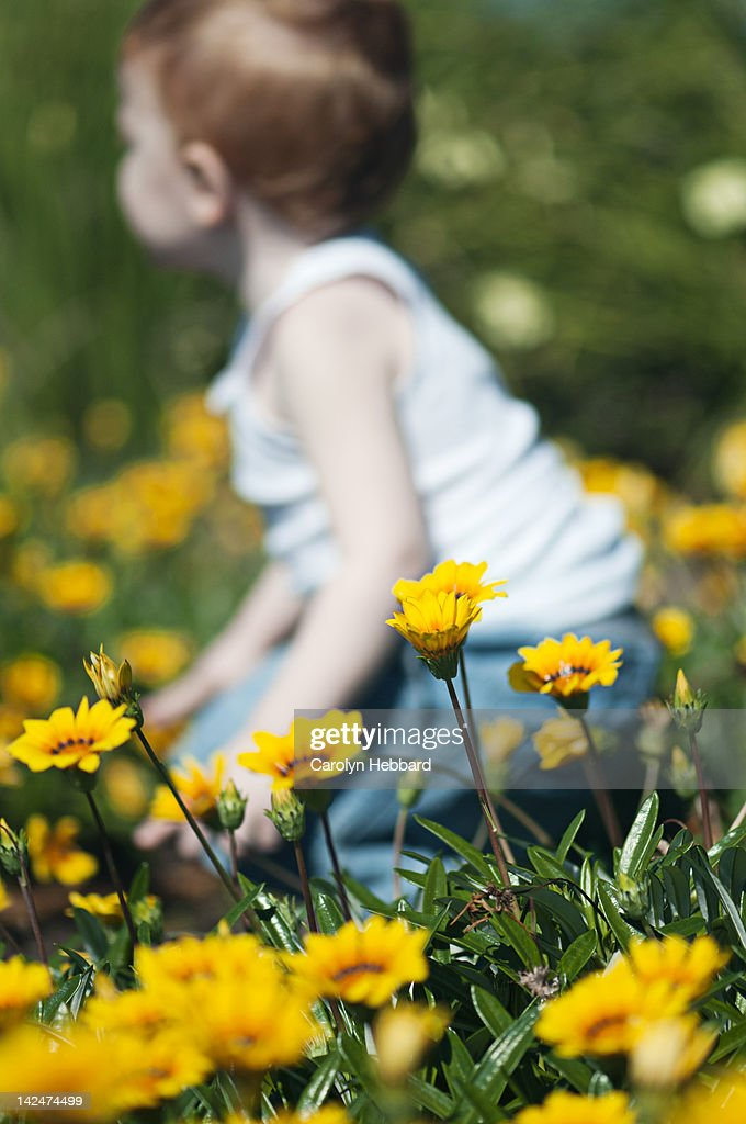 Boy playing in field of yellow flowers : Stock Photo