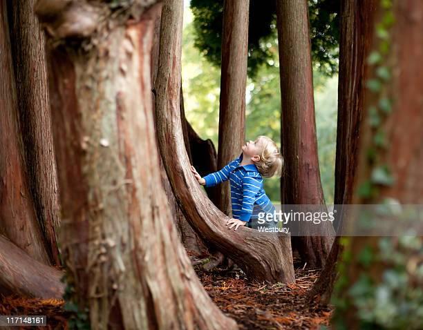 Garçon dans les bois