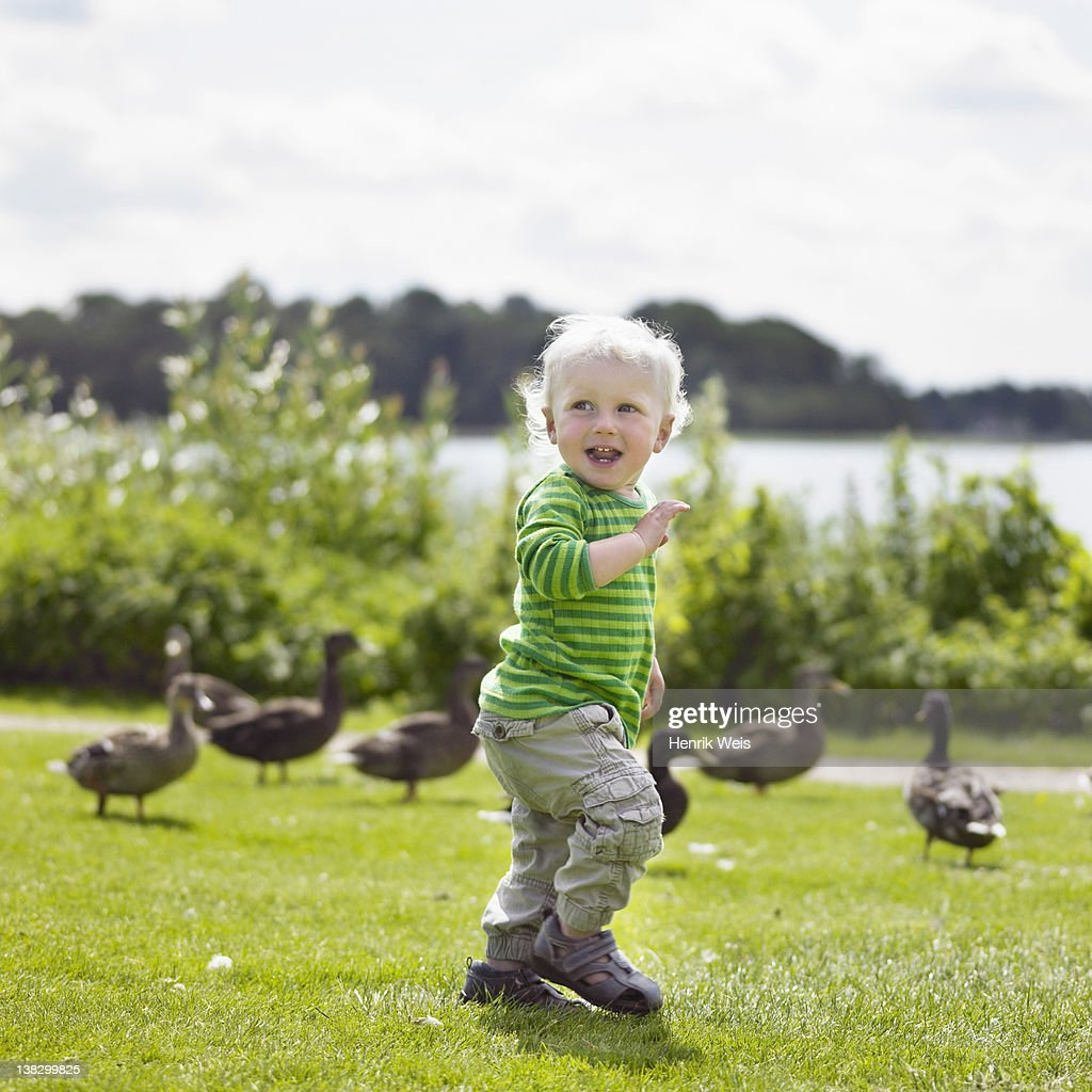 Boy playing with ducks in yard : Stock Photo