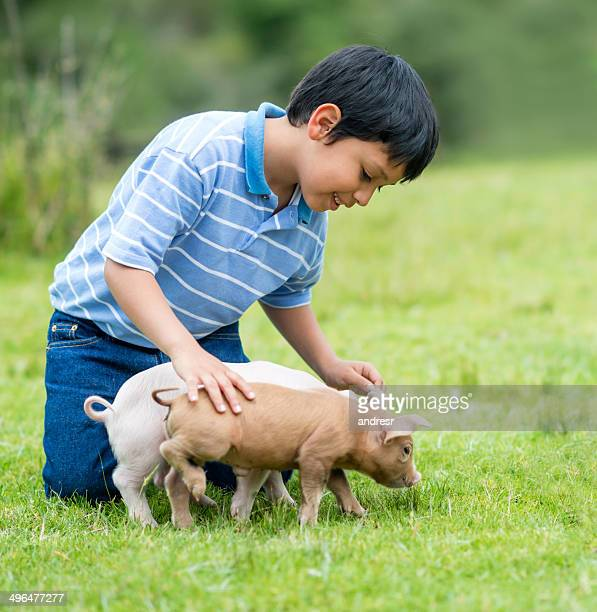 Boy playing with piglets