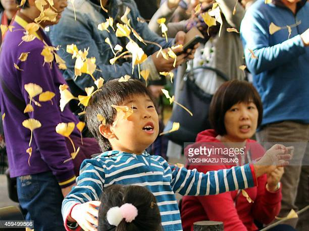 A boy plays with yellow ginkgo tree leaves in Tokyo on November 24 2014 Local residents came out to admire some 150 ginkgo trees displaying their...