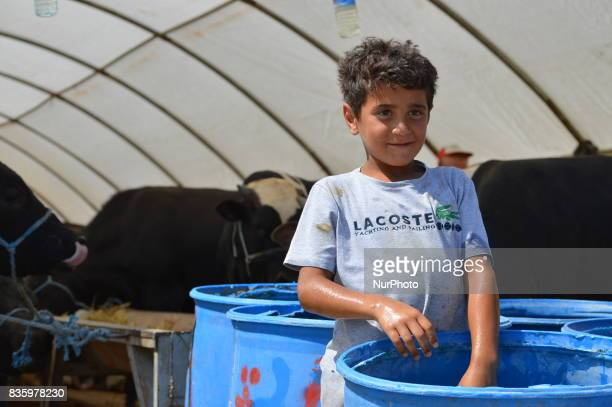A boy poses for a picture at a livestock market in the Yakacik area of Ankara Turkey on August 20 2017 Shepherds have brought their animals to the...
