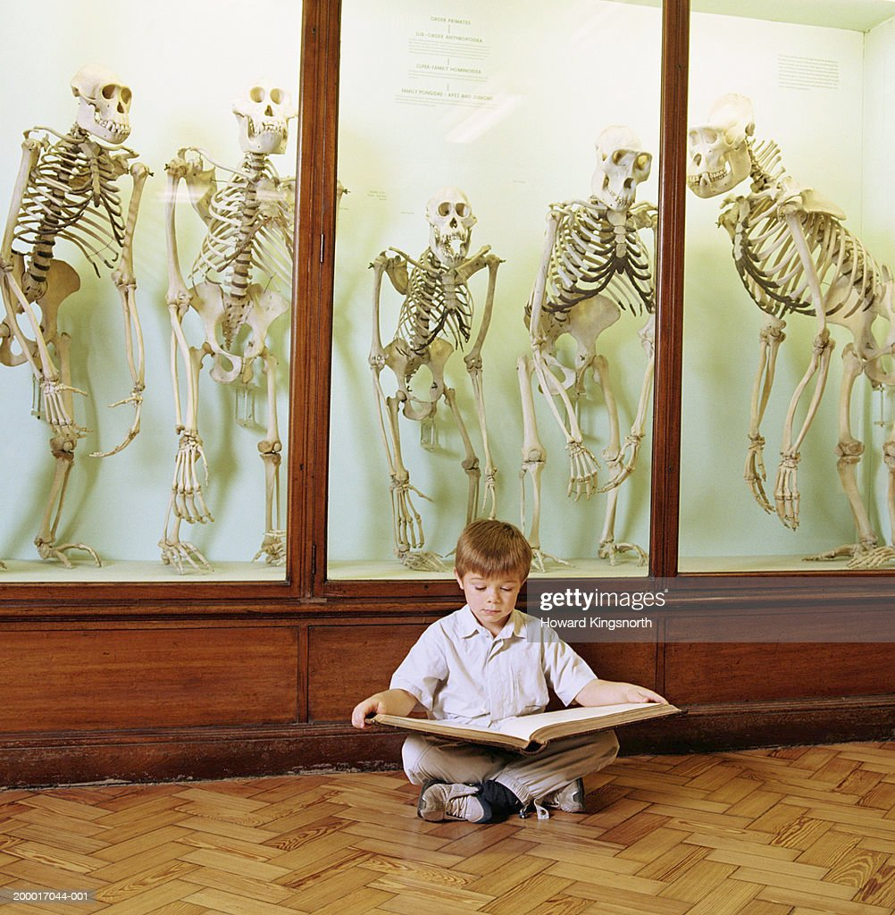 Boy (6-8) reading book in front of cabinet of primate skeletons : Stock Photo