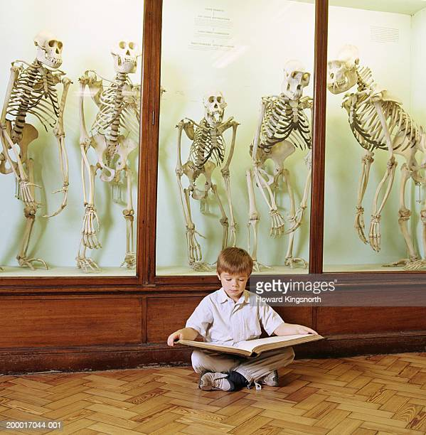 Boy (6-8) reading book in front of cabinet of primate skeletons