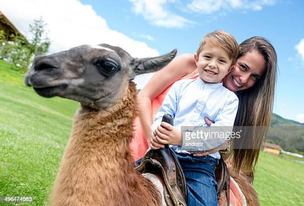 Boy riding a llama