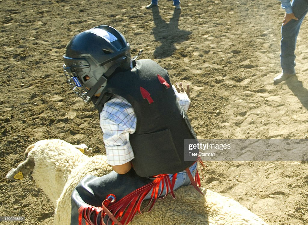 Boy riding a sheep at a Mutton Busting rodeo : Stock Photo