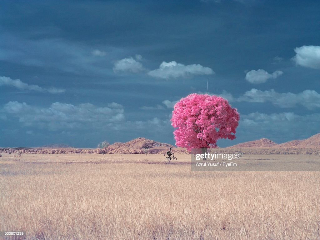 Boy Riding Bicycle On Country Road