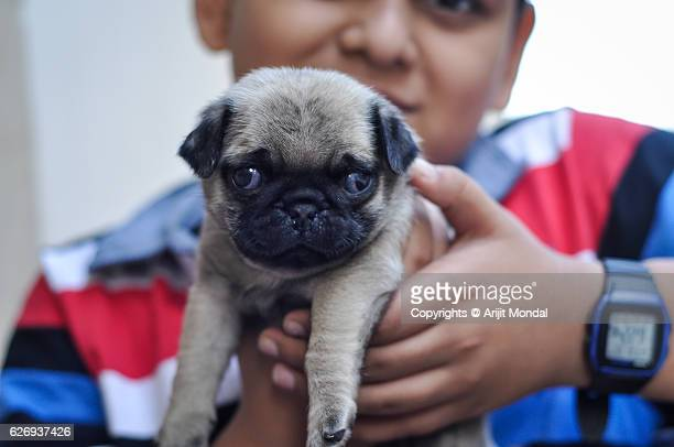 Boy Showing his Pug Puppy by Holding it Towards the Camera