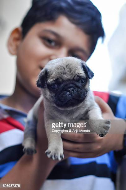 Boy Showing his Pug Puppy Front of the Camera