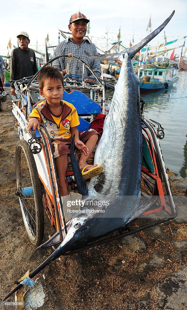 A boy sits with a Black marlin fish in a pedicab at Muncar Port on May 25, 2014 in Banyuwangi, Indonesia. Indonesia has become one of the major exporters of meat and shark fins in the world, producing 640 thousand tons per year. The Indonesian government is tightening regulations for the fishing of sharks and manta rays, which are now included in the list of Appendix II of the Convention on International Trade in Endangered Species (CITES).